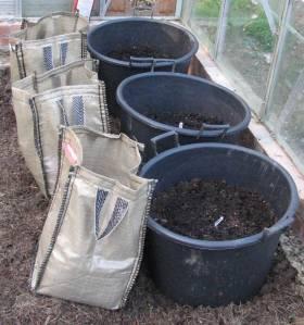 Greenhouse Potatoes