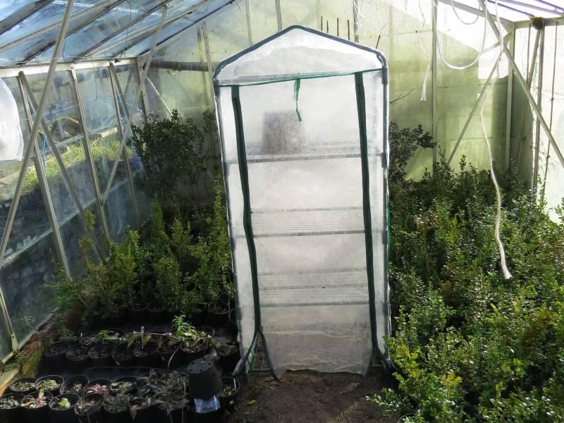 Blow-away inside Greenhouse - Feb 2015